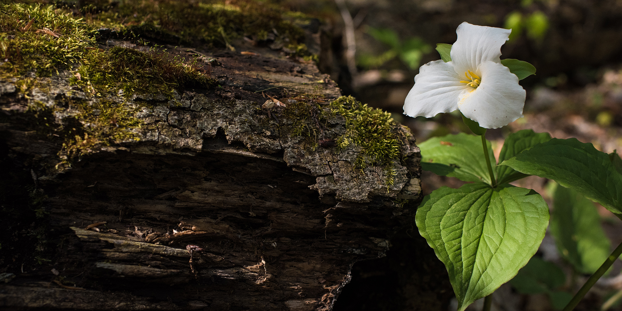 Flower on tree stump in forest